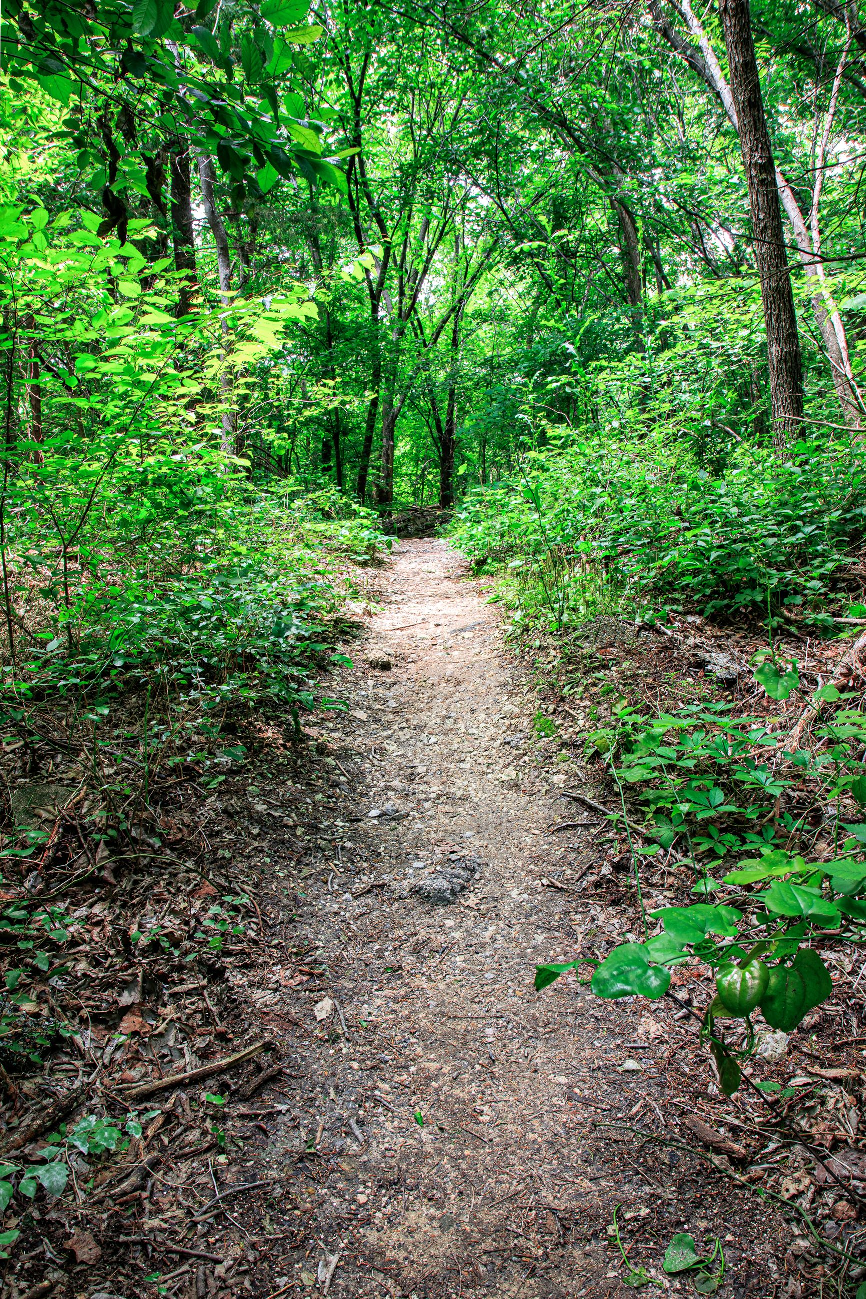 Spring Creek Forest Preserve wooded area with dirt trail